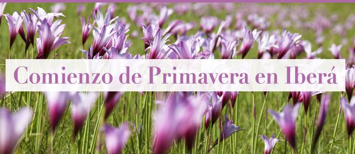 newsletter_header_2_es